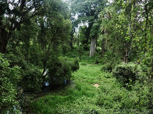 ngare-ndare-kenya-camping28