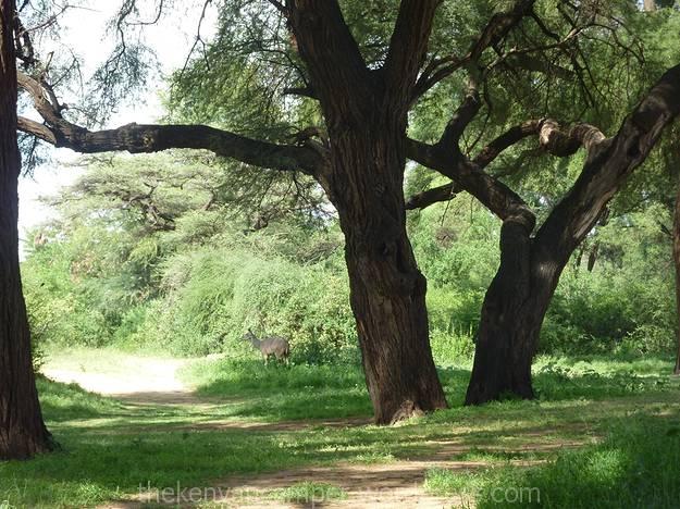 samburu-national-reserve-camping-kenya-camping01