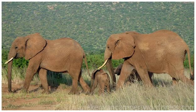 samburu-national-reserve-camping-kenya-camping03