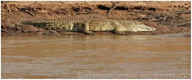 samburu-national-reserve-camping-kenya-camping05