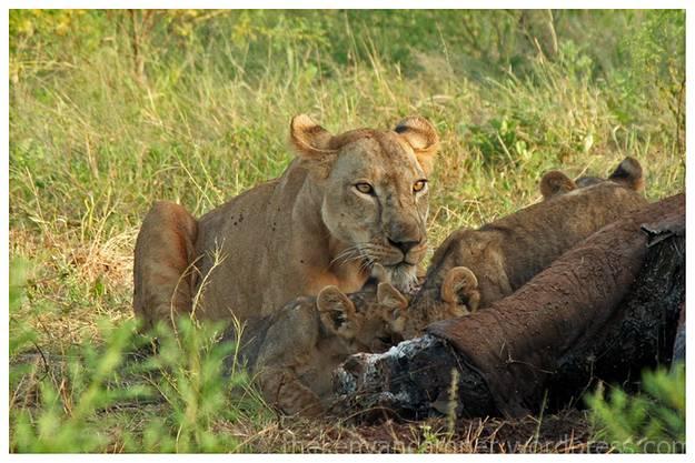 samburu-national-reserve-camping-kenya-camping08