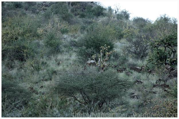 samburu-national-reserve-camping-kenya-camping09