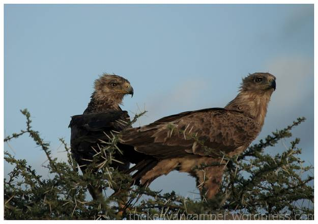 samburu-national-reserve-camping-kenya-camping12
