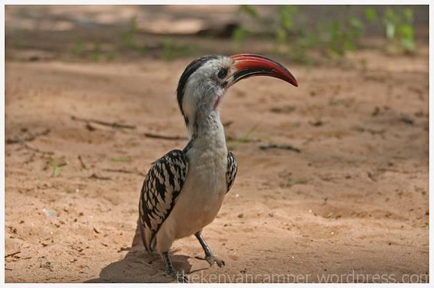 samburu-national-reserve-camping-kenya-camping13