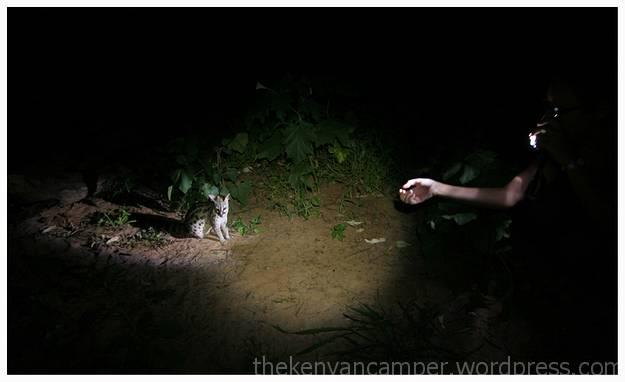 samburu-national-reserve-camping-kenya-camping15