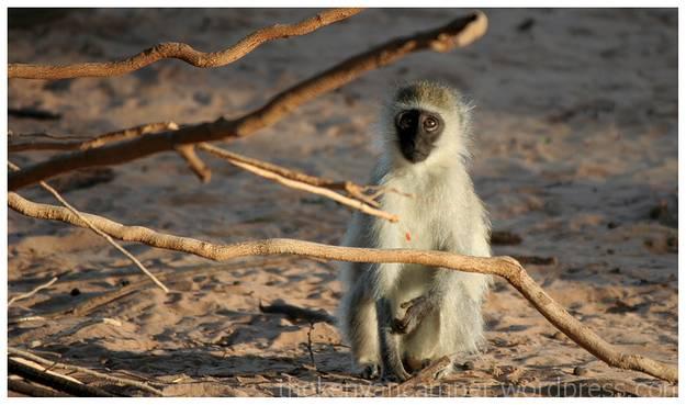 samburu-national-reserve-camping-kenya-camping19