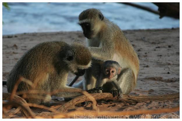 samburu-national-reserve-camping-kenya-camping20