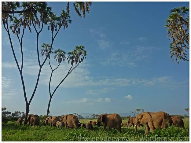 samburu-national-reserve-camping-kenya-camping21