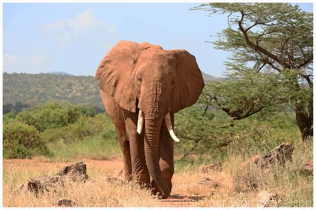 samburu-national-reserve-camping-kenya-camping23