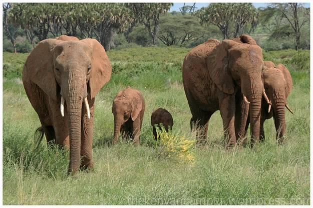 samburu-national-reserve-camping-kenya-camping24