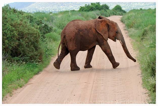 samburu-national-reserve-camping-kenya-camping25