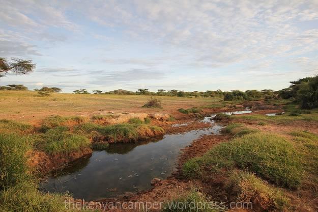 sera-wildlife-conservancy--kenya-bandas-02