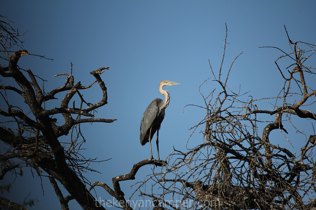 mwea-national-reserve-camping-kenya-13