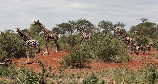 mwea-national-reserve-camping-kenya-15