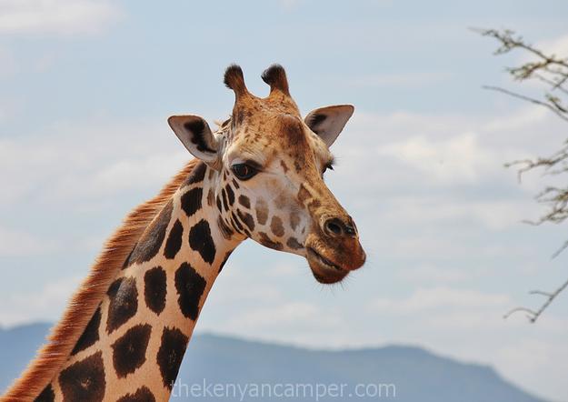 mwea-national-reserve-camping-kenya-17