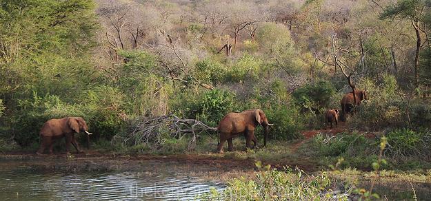 mwea-national-reserve-camping-kenya-33
