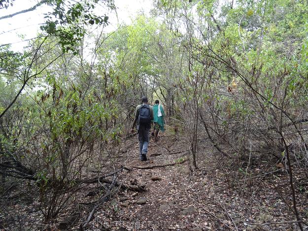 mukogodo-forest-camping-kenya-05