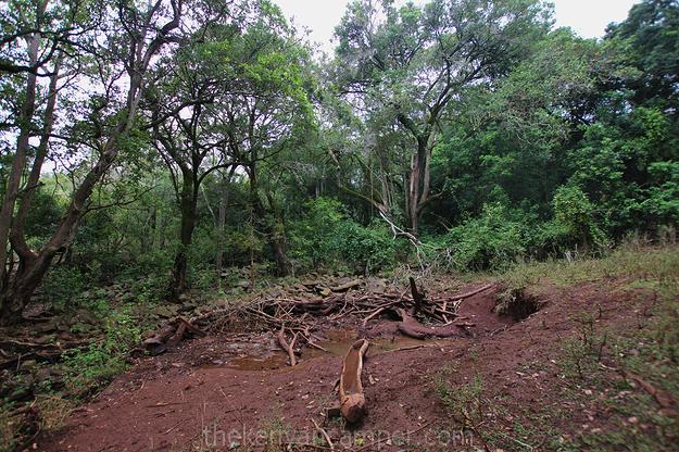 mukogodo-forest-camping-kenya-16
