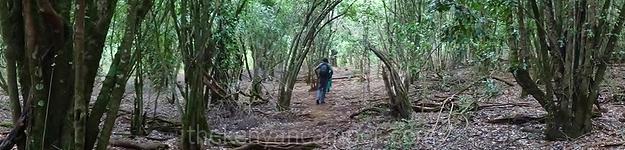 mukogodo-forest-camping-kenya-46