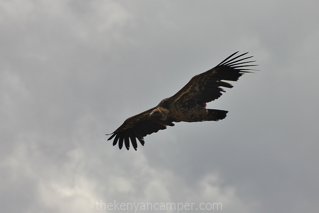 ololokwe-samburu-camping-kenya-31