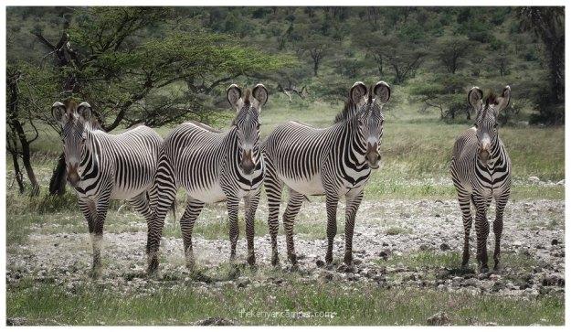 nakuprat-gotu-conservancy-kenya6