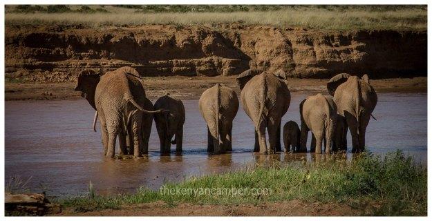 westgate-conservancy-camping-kenya-42