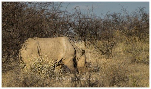 sera-conservancy-rhino-camping-kenya-22