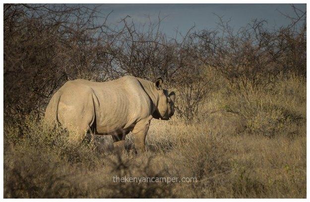 sera-conservancy-rhino-camping-kenya-23