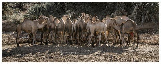 sera-conservancy-rhino-camping-kenya-44