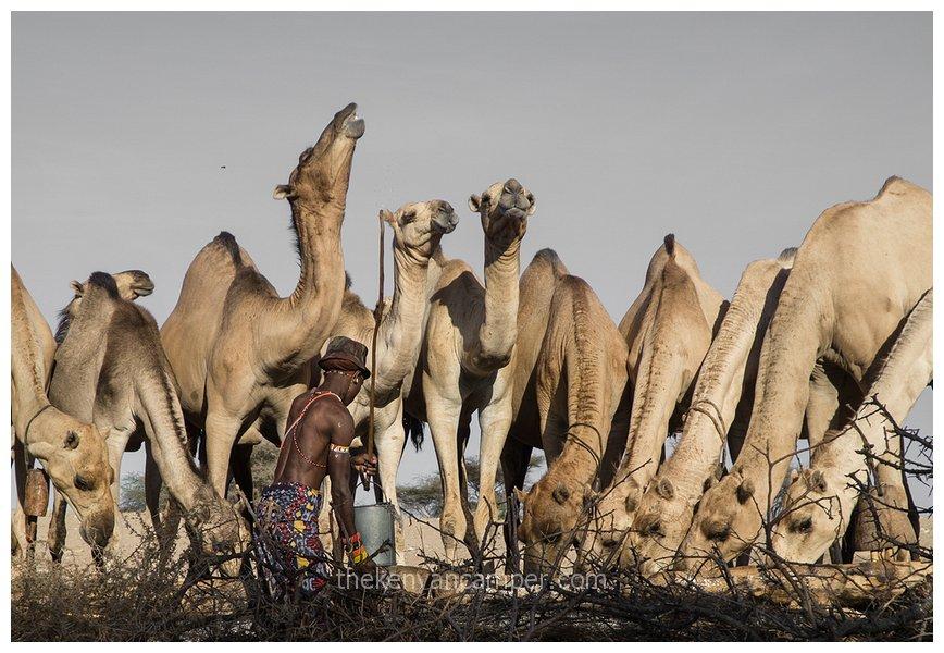 sera-conservancy-rhino-camping-kenya-49