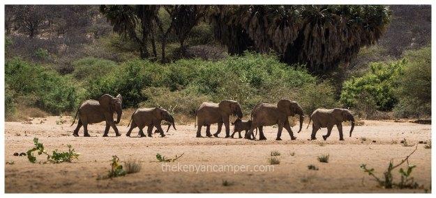 sera-conservancy-rhino-camping-kenya-5