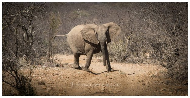 sera-conservancy-rhino-camping-kenya-58