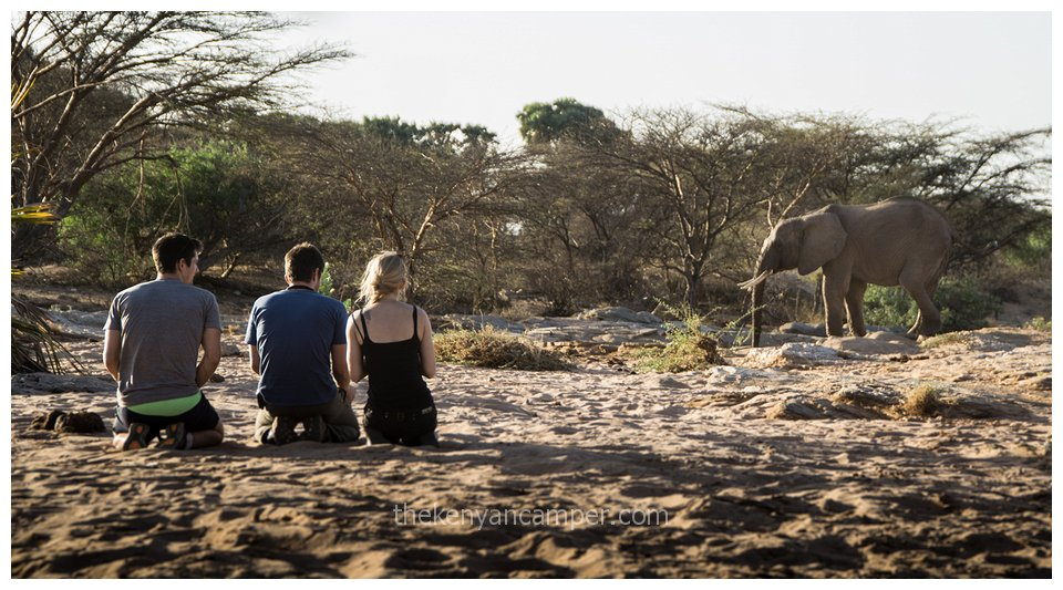 sera-conservancy-rhino-camping-kenya-6