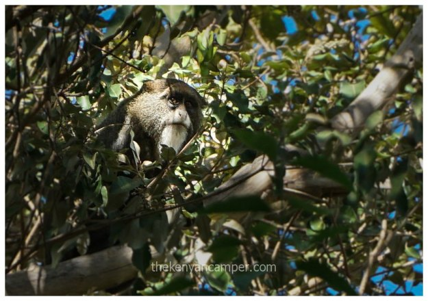 namunyak-mathews-range-samburu-kenya-21