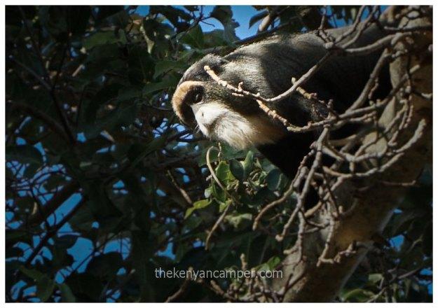namunyak-mathews-range-samburu-kenya-25