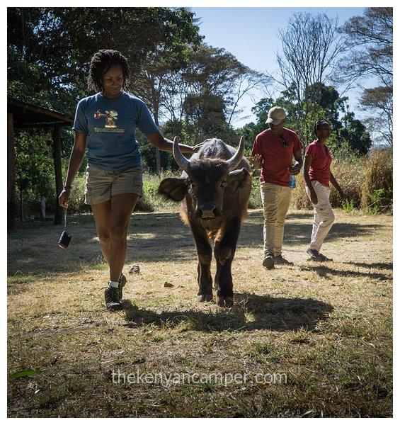 namunyak-mathews-range-samburu-kenya-69