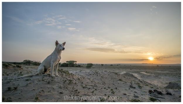 amboseli-olgulului-nyiri-desert-camping-kenya-38