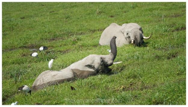 amboseli-olgulului-nyiri-desert-camping-kenya-51