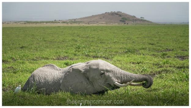 amboseli-olgulului-nyiri-desert-camping-kenya-52