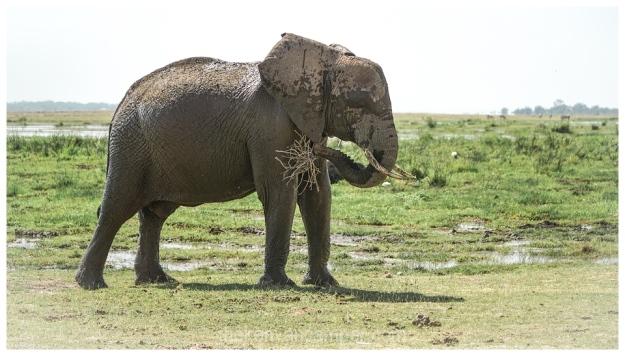 amboseli-olgulului-nyiri-desert-camping-kenya-55
