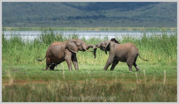 lake-chala-tsavo-west-lake-jipe-camping-kenya-62