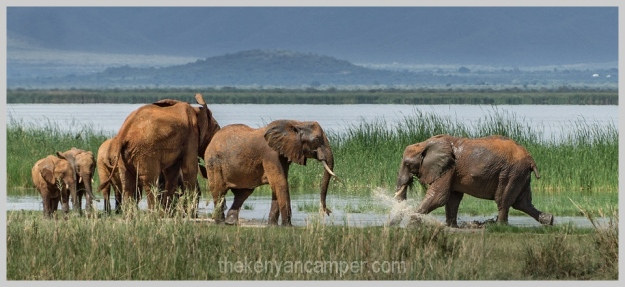 lake-chala-tsavo-west-lake-jipe-camping-kenya-69