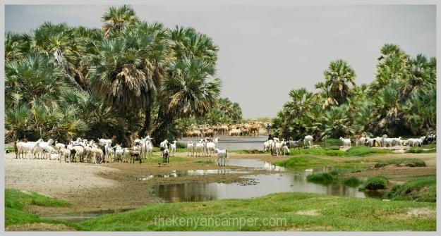 ngurunit-turkana-kalacha-marsabit-camping-kenya-139