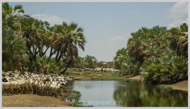 ngurunit-turkana-kalacha-marsabit-camping-kenya-138