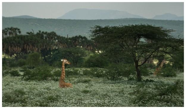 shaba-national-reserve-isiolo-camping-kenya-27
