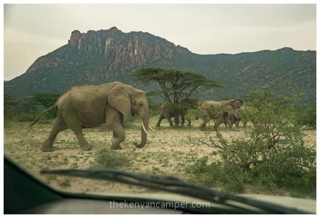 shaba-national-reserve-isiolo-camping-kenya-32