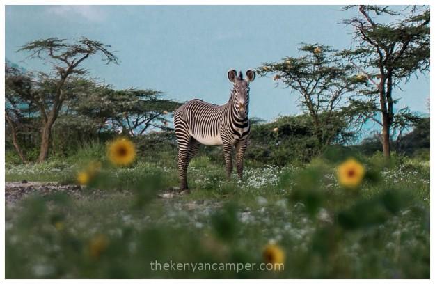 shaba-national-reserve-isiolo-camping-kenya-55