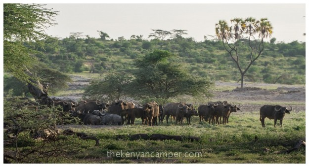 shaba-national-reserve-isiolo-camping-kenya-64