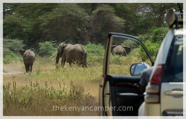 kimana-sanctuary-amboseli-kenya-10