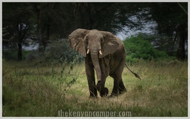 kimana-sanctuary-amboseli-kenya-11